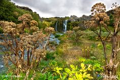 Gjáin valley - Gjáin with its small waterfalls, ponds, and volcanic structures is situated in the south of Iceland.  Book your Photo tour now at: http://www.discoverwildiceland.com © 2015 Photos available at http://www.IceStockPhotos.com