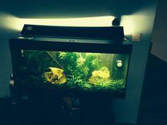 Aquarium Konijn   Pawshake Temse