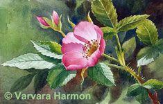 Wild Rose, Watercolor painting by Varvara Harmon
