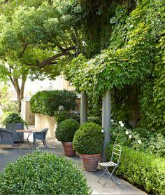 Myra Hoefer's green - shrouded garden at her home in Healdsburg, CA in the heart of Sonoma.