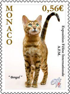 Bengal cat - Postage stamp, Monaco (2009) - Photo by Giuseppe Mazza