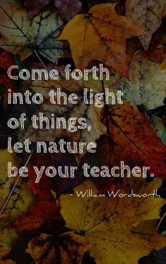 Let the Fall teach you to let go...