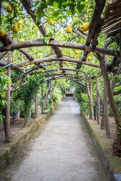 Limoncello in Sorrento, Italy | www.sweetteasweetie.com