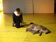"""""""L'ARTE DEL TEATRO"""" #emiliaromagnateatro #modena #Bologna #DramaTeatro #TeatrodelleMoline #stagione20162017 #theatre #stage #PascalRambert #PaoloMusio #cane #produzioneERT #ArteDelTeatro foto #LucaDelPia"""