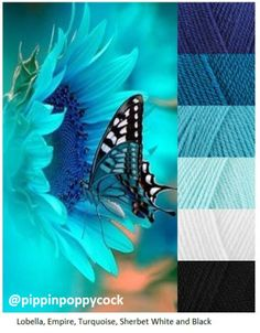 Classic Blue Butterfly