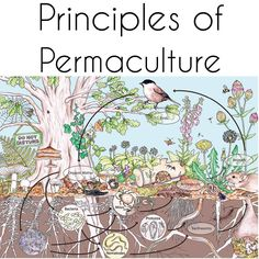 """permaculture-prowess: """" Principle 7: Design from patterns to details By stepping back, we can observe patterns in nature and society. These can form the backbone of our designs, with the details..."""