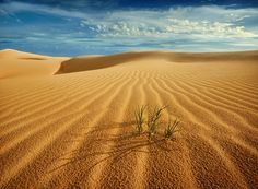 desert dance ... by Ah Sheremet'ev