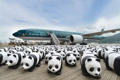 1600 pandas board Cathay Pacific bound for Hong Kong ·ETB Travel News Australia