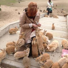 Ōkunoshima, The Rabbit Island, tame rabbits deliberately left on the island and can be hand fed