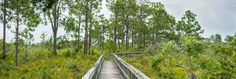SWFL Free Guided Nature Walks -  Nature Walks - Conservancy of Southwest Florida