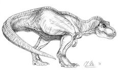 Draw Dinosaurs One noice Rexy sketch by whatever that signature says. T Rex Jurassic Park, Jurassic Park Series, Jurassic Park World, Dinosaur Sketch, Dinosaur Drawing, Dinosaur Art, Animal Sketches, Animal Drawings, Cute Drawings