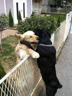 Bring down the fences - Imgur