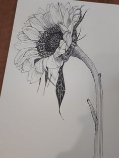 Victoria Sanderson on is part of pencil-drawings - Great weekend teaching pen + ink botanical illustration We studied sunflowers + their challenging Fibonacci sequences! Pencil Drawings Of Flowers, Pencil Art Drawings, Art Drawings Sketches, Sunflower Sketches, Sunflower Drawing, Watercolor Art, Watercolor Portraits, Watercolor Landscape, Watercolor Flowers