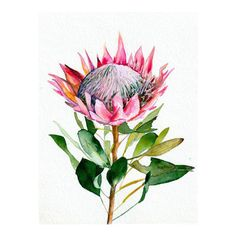 Protea by Christine Lindstrom - A botanical watercolor illustration of a protea Art Prints, Botanical Art, Canvas Prints, Painting, Protea Art, Watercolor Flowers, Art, Original Watercolor Painting, Original Watercolors