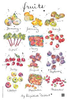 Art Print - Fruits - Kitchen Art - Illustration - Seasons - from Original Ink and Watercolour Illustration