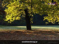 Polish Gold Autumn / Polska zlota jesien © by http://DobreSciagi.pl
