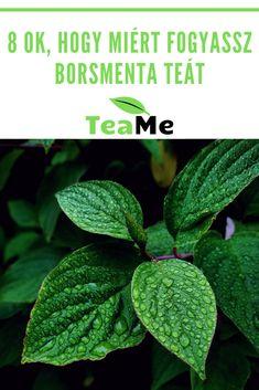 A borsmenta tea rendszeres fogyasztása valóságos csodaszerként hathat a szervezetünkre. Tea Blog, Plant Leaves, Plants, Plant, Planets