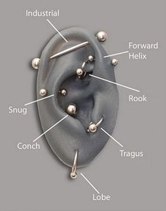 I'd get rook, tragus, forward helix and lobe..I'd get up by the industrial but not the actual bar!!