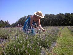 Lavender Ridge Farms, Gainesville, Texas
