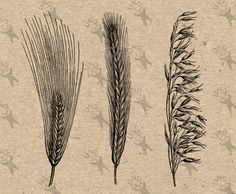 Retro drawing Agricultural Grass Vintage image Instant Download printable clipart digital graphic fabric transfer decor print burlap 300dpi by UnoPrint on Etsy