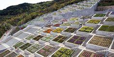 Tadao Ando's magnificent stepped memorial garden