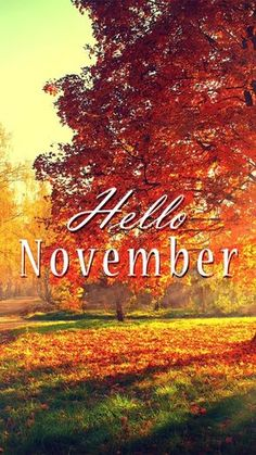 November is my favorite month.some of my favorite people were born in November. November is my favorite month.some of my favorite people were born in November. November Tumblr, November Images, November Pictures, November Quotes, Fall Pictures, Seasons Months, Days And Months, Months In A Year, 12 Months