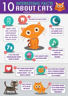 """We made an infographic with 10 interesting facts about cats to increase people's knowledge about cats.Net"""" is an online portal for … - endangered animals for kids, endangered animals, animal facts for kids, animal websites, animal informatio Cat Care Tips, Pet Care, Pet Tips, Kittens Cutest, Cats And Kittens, Orange Kittens, Baby Kittens, 10 Interesting Facts, Kitten Care"""