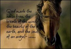 God made Horse: Very Nice. I Like it.