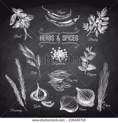 Vector hand drawn set with culinary herbs and spices. Vintage illustration. Chalkboard. - stock vector