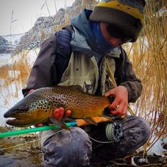 Brown on the blue halo 7 wt.