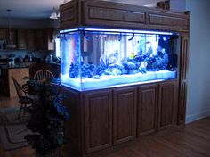 Saltwater aquarium fish for sale in wholesale and retails for Fish tank divider 75 gallon