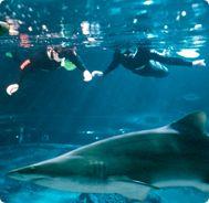 Aquarium of Western Australia (AQWA).