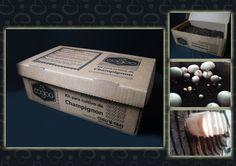 Kit Cogoo champignon