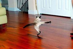 Diese euphorisch davonstiefelnde Katze: | 19 Tier-Fotos, die zeigen, dass die Erde vielleicht kein so schlechter Ort ist
