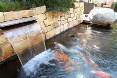 #Koi #Fish #Koiteich #Garten #JapanischerGarten