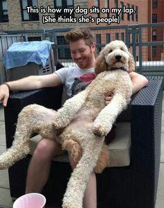 What?  I'm a dog?