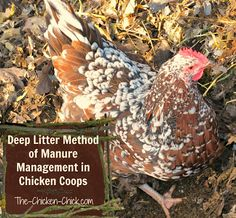 The Deep Litter Method of Waste Management in Chicken Coops