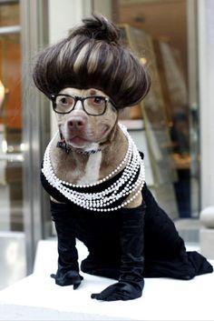 very funny dog costume