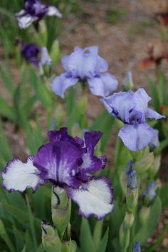 Conrad Art Glass & Gardens: Pre-June bloom...