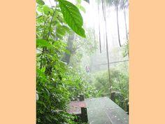 Costa Rica, Plant Leaves, Plants, Flora, Plant
