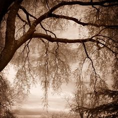 tree branches art moody sepia mocha brown infrared by SherriConley, $30.00
