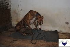 Prohibition of hunting in Spain with the galgos greyhounds! ... - Care2 News Network