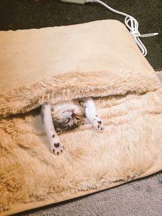 【朗報】足用ホットカーペット、完全に猫ぶとんになるwwwwwwww:ハムスター速報