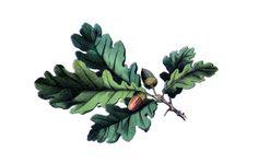 "Vintage Oak Leaf Temporary Tattoo - ""Oaky Doki"""
