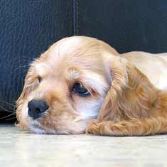 Separation Anxiety - Helping Your Puppy Cope. #dogs #training #tips