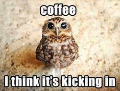 LOL. 3am, en medio de una traducción, tomo café y de repente todo vuelve a tener sentido. <3