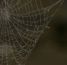 Simple, yet beautiful close up shot of a spider's web. Photo by Andy Hay (rspb-i… Simple, yet beautiful close up shot of a spider's web. Nature Photography Tips, Texture Photography, Close Up Photography, Photography Projects, Abstract Photography, Digital Photography, Photography Classes, Photography Jobs, Forensic Photography