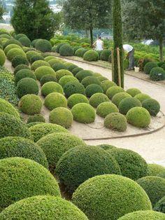 Topiary balls.  http://umjardimparacuidar.blogspot.co.uk/2013/07/arbustos-talhados-ou-o-encanto-da.html