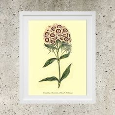 Vintage Botanic Garden Purple Flowers  SALE Wall by DigitalBanana Sweet William