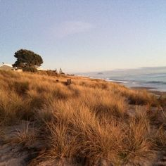 Papamoa Beach, Bay Of Plenty. A beautiful winter morning. Photo by Kellie Rillstone. #whim_adventurous